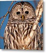 Lit Up Owl Metal Print