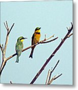 Little Bee-eaters Metal Print