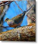Little Birdie 2 Metal Print