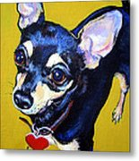 Little Bitty Chihuahua Metal Print