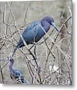 Little Blue Lake Martin Louisiana Metal Print