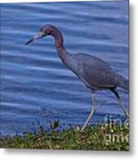 Little Blue Strut Metal Print