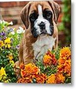 little Boxer Puppy in flowers Metal Print by Doreen Zorn