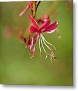 Little Bug On The Tip Of A Flower Metal Print