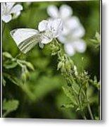 Little Butterfly Metal Print