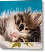 Little Cat Kitten Metal Print