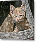Little Charlie - Kitten By Wagon Wheel - Casper Wyoming Metal Print