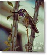 Little Costa's Hummingbird Metal Print