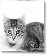 Little Cute Kitten. Space For Your Text Metal Print