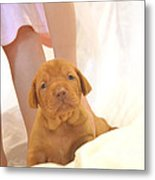Little Dancer And Her Puppy Metal Print