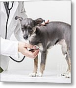 Little Dog At The Vet Metal Print