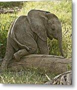 Little Elephant Big Log Metal Print