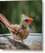 Little Feather Metal Print