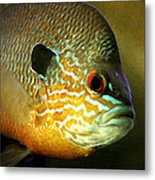 Little Fish Metal Print by Linda Fowler