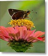 Little Glassywing Skipper Butterfly Metal Print
