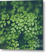 Little Green Leaves Metal Print
