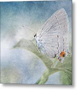 Little Grey Hairstreak Metal Print