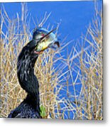 Little Hungry  Metal Print