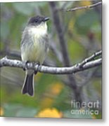 Little Lady Eastern Kingbird Metal Print
