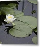 Little Lilly Metal Print
