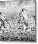 Little Lion Cub Brothers Metal Print