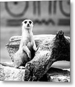Little Meerkat Metal Print