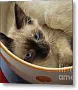 Little Miss Blue Eyes Metal Print