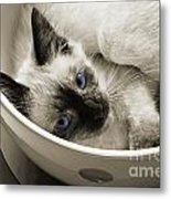 Little Miss Blue Eyes B W Metal Print by Andee Design