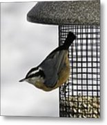 Little Nuthatch Metal Print
