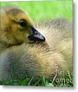 Little One Metal Print