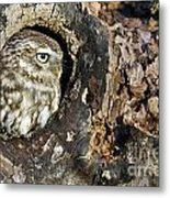 Little Owl 4 Metal Print