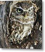Little Owl 6 Metal Print