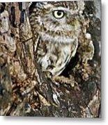 Little Owl In Hollow Tree Metal Print