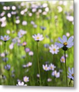 Little Pink Daisies  Metal Print