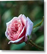 Little Pink Rose Metal Print