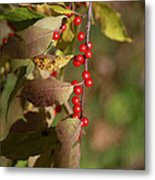 Little Red Berries Metal Print