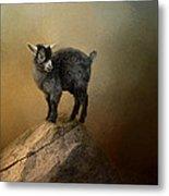 Little Rock Climber Metal Print