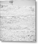 Little Tree On The Hill - Black And White Metal Print