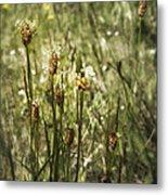 Little Weeds Metal Print