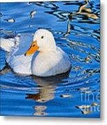 Little White Duck Metal Print