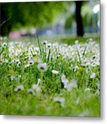 Little White Flowers II Metal Print