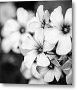 Little White Flowers. Metal Print