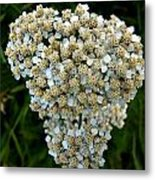 Little Whites Metal Print