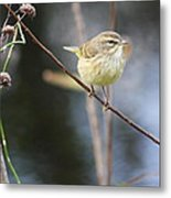 Little Yellow Bird In The Glades Metal Print