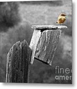 Little Yellow Bird Metal Print