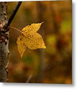 Little Yellow Leaf Metal Print