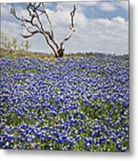 Live Bluebonnets And Dead Tree Metal Print