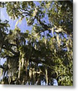 Live Oak Dripping With Spanish Moss Metal Print