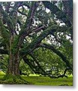 Live Oak Trees Metal Print