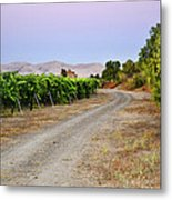 Livermore Vineyard 3 Metal Print